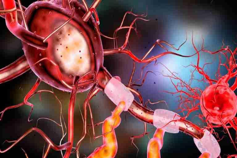 """Autonomic Nervous System, also known as """"ANS"""""""